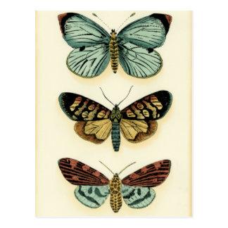 Coleção da borboleta por Chariklia Zarris Cartão Postal