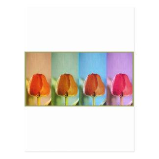 Coleção da mostra dos botões - 1 cartão postal