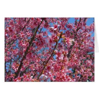 Coleção de florescência de CricketDiane das árvore Cartão