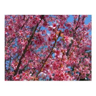 Coleção de florescência de CricketDiane das árvore Cartao Postal