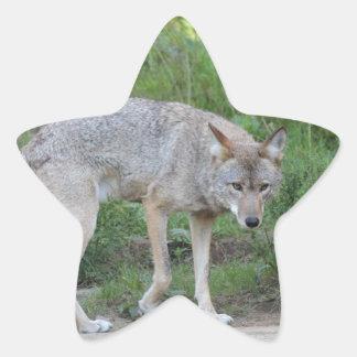 Coleção do chacal adesivo estrela