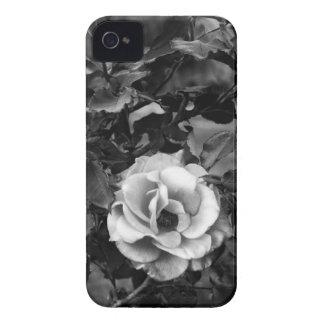 Coleção do rosa branco capinha iPhone 4