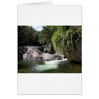 Coleção Samambaia Cartão Comemorativo