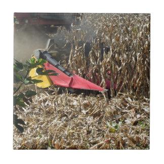 Colheita do milho da colheita mecanizada no campo