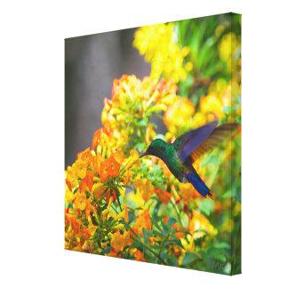 colibri Azul-atado de Costa Rica em canvas