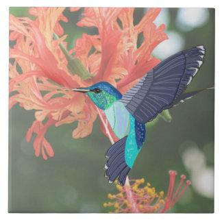 Colibri azul e verde e hibiscus alaranjado