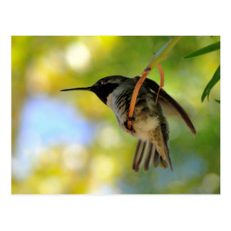 Colibri - cartão