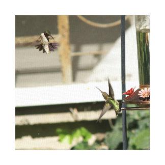 Colibri, cópia das canvas
