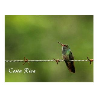 Colibri Costa Rica do cartão