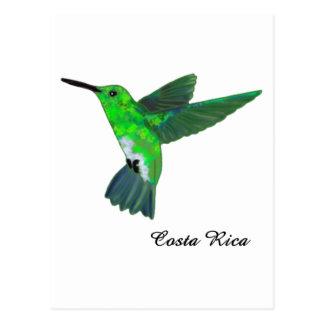 Colibri de Costa Rica Cartão Postal