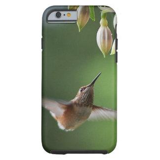 Colibri e planta de Fushia Capa Tough Para iPhone 6