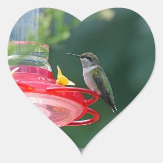 Colibri empoleirado adesivo coração