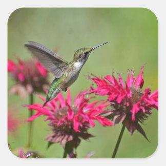 Colibri esverdeado que paira sobre flores adesivo quadrado