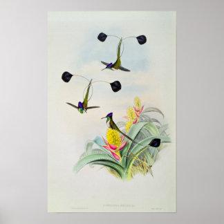 Colibri, gravado por Walter e por Cohn Posteres
