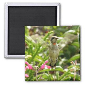 Colibri & Maraschino Imãs