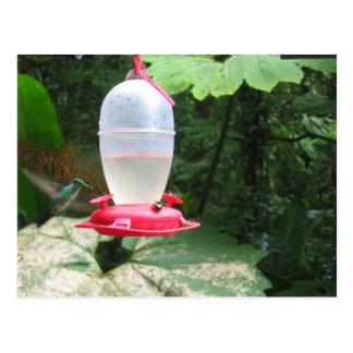 Colibri - Monteverde, Costa Rica Cartoes Postais