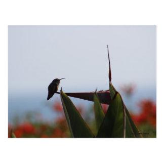 Colibri no cartão da flor do Pássaro--Paraíso