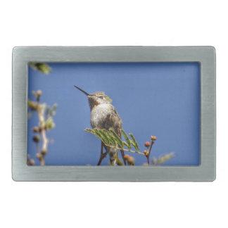 Colibri no ramo por SnapDaddy