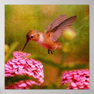 Colibri Posteres