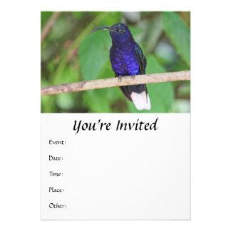 Colibri tropical convites personalizado