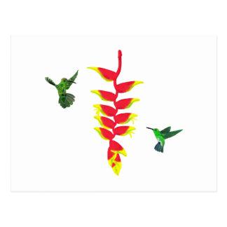 Colibris e Heliconia de Costa Rica Cartão Postal