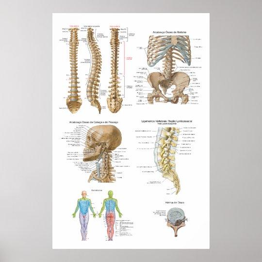 Coluna vertebral, Quiropraxia Poster