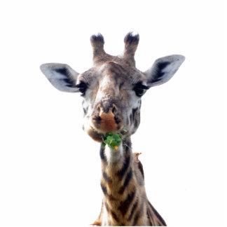 comendo o girafa escultura foto