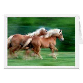 Competindo o cartão dos cavalos do Palomino