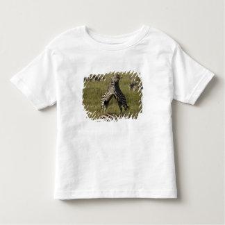Comportamento do domínio da zebra comum camiseta