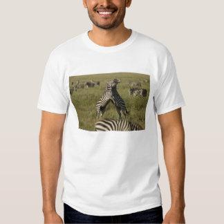 Comportamento do domínio da zebra comum tshirt