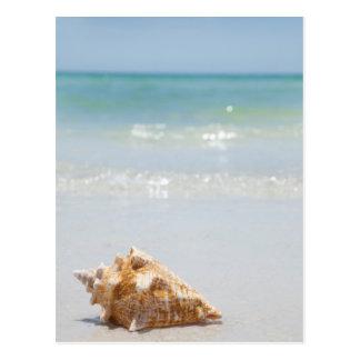 Conch Shell na praia | Florida, St Petersburg Cartão Postal