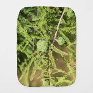 Cone da semente de Cypress calvo Paninho Para Bebês