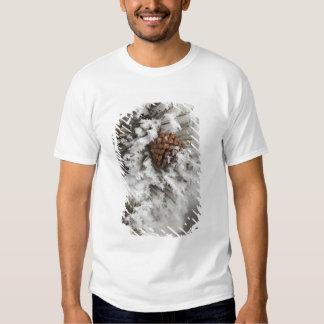 Cone do pinho de Lodgepole no inverno em Camisetas