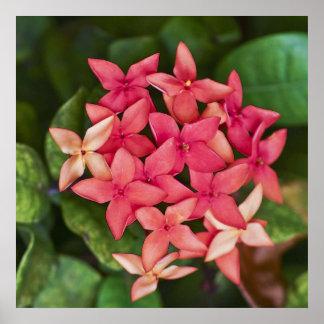 Conjunto de flor vermelho poster
