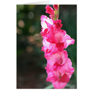 Contente-contente-tipo de flor! cartão