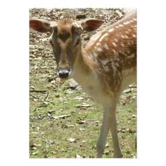 Convite da jovem corça dos cervos
