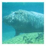 Convite do Hippopotamus
