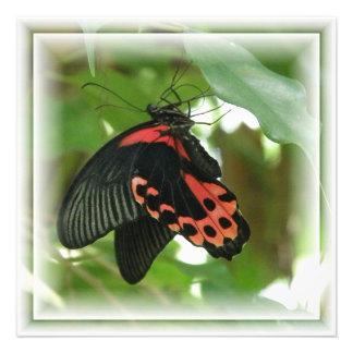 Convite tropical da borboleta