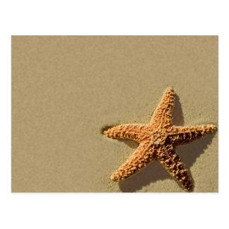 Convite tropical do casamento de praia do evento cartão postal