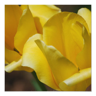 Convites amarelos das tulipas