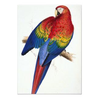 Convites tropicais do papagaio