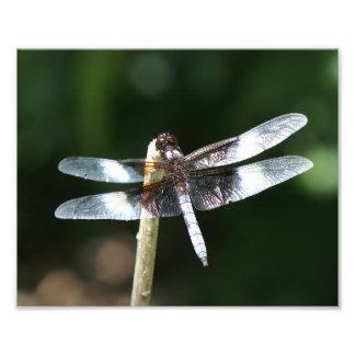 Cópia da foto da libélula