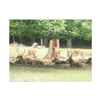 Cópia das canvas dos amores do animal do jardim zo impressão em tela