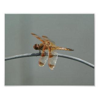 Cópia pintada da foto da libélula do Skimmer