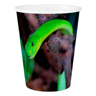 Copo De Papel Pitão do cobra verde