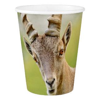 Copo De Papel Retrato de um íbex