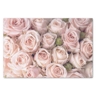 Cora o lenço de papel cor-de-rosa dos rosas
