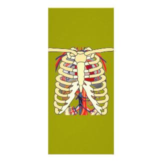 Coração ampliado das veias dos reforços 10.16 x 22.86cm panfleto