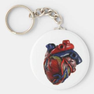 Coração anatômico chaveiro