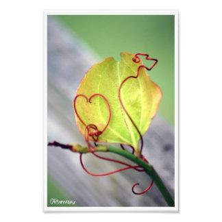 Coração da videira impressão de foto